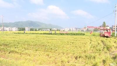 农村处理秸秆再不头疼了!秸秆粉碎变肥料,增加经济效益67000元
