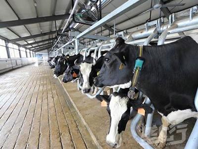 湖北新型养殖模式促进绿色畜牧业