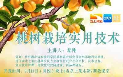 长江云垄上农学院:果木课堂之桃树栽培实用技术(内附音频)