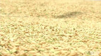 鄂州:小麦春季田管技术指导意见