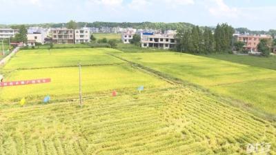 秸秆粉碎变肥料,改善土质助生产,增加经济效益67000元