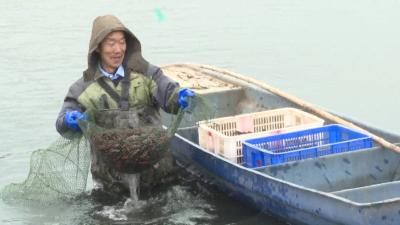 冬季小龙虾不冬眠,能卖到春节前后?一个就有8钱左右!怎么养的