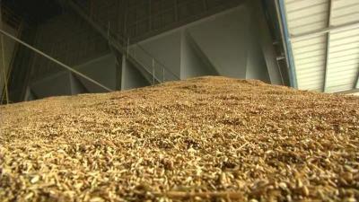 稻谷消化进度缓慢价格稳中下行