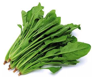 越冬菠菜如何管理能高产?越冬菠菜高产栽培技术,一看就懂