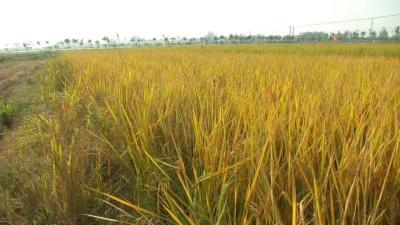 【视频】水稻课堂:春耕备种这些事