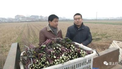 新春走基层   乡镇农技员的一天,他已坚持20多年