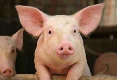 我省非洲猪瘟疫区解除封锁
