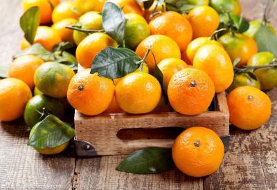 """【柑橘】柑价是个""""黑洞"""",换种能否解决问题?"""