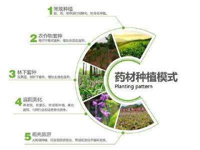 【中药材】5大中药材种植模式,这两个是高收益黄精种植模式