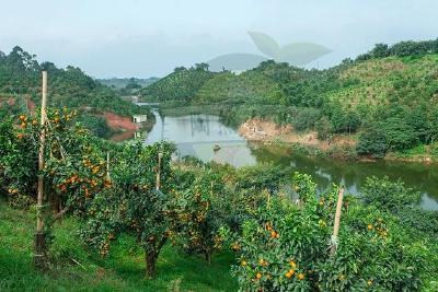 【柑橘】柑桔建园改土、起垄栽培技术要点!