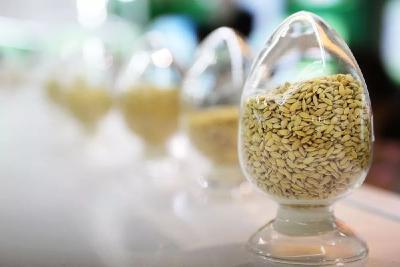 今年水稻该咋选种?