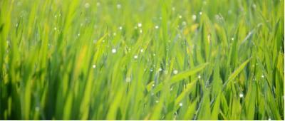 倒春寒?防冻最关键时间节点——春末小麦拔节以后