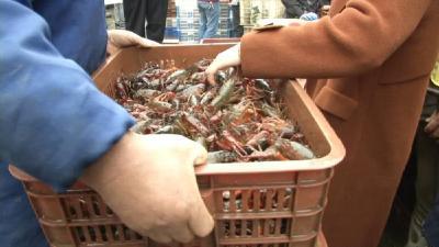 小龙虾走上旺季,日销300吨人挤人!白沙洲新辟小龙虾交易专区