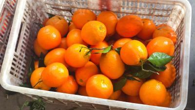 【行情】4月28日湖北橙子产地:均价1.80元/斤,较前日上涨0.05元,涨幅2.8%