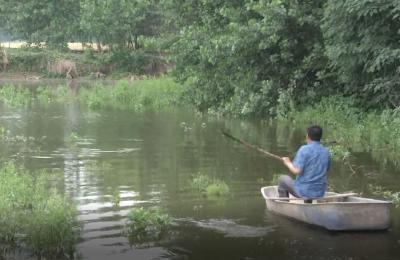 鱼儿只在水面游,一天死近20斤!乡亲疑惑鱼到底咋了?