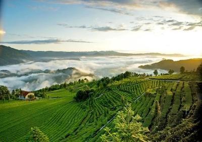 中国茶旅大会永久落户五峰