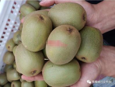 【猕猴桃】夏季是猕猴桃果实生长的关键时期 有这些要点注意