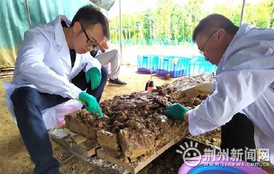 熊家冢祔冢殉葬墓清理出36件玉器、4件青铜器