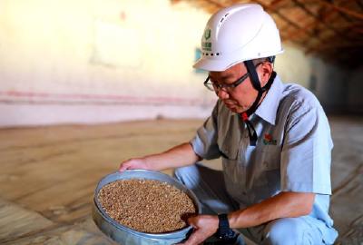 湖北省启动今年小麦托市收购