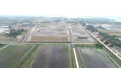 """有蟹驾""""稻"""" 荆州区八岭山镇尝试养殖转型升级"""