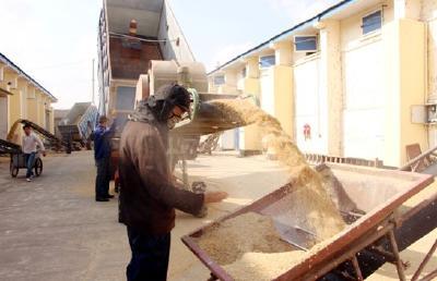 """@种粮农民 关于卖粮,这份""""售粮指南""""你值得拥有"""