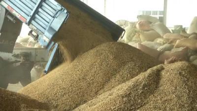 持续高温,黄豆产量、质量双降,价格意外大幅走高