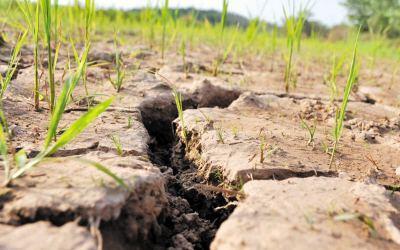 持续高温少雨 湖北4270座水库开闸放水抗旱