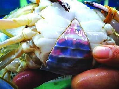 青岛螃蟹鲳鱼价格大跳水 国庆节前还会上涨