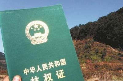 石首颁发八百多本林权类不动产证 免收登记费