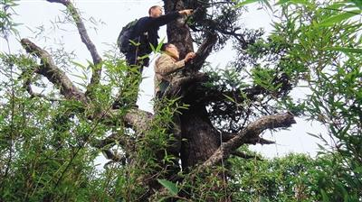 湖北森林公安整治破坏野生动植物资源行为