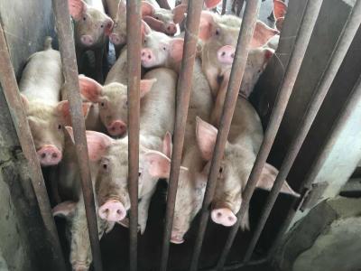 """经济日报:""""只想吃肉不想养猪""""养猪与环保并非二选一!"""