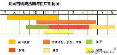 """【柑橘】19个柑橘新品种,哪个更适合错峰上市?哪个才是下一个""""沃柑""""?"""