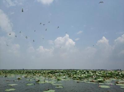 30亿省级地方债券用于洪湖退垸还湖 计划3年内完成还湖20万亩