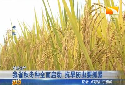 """寒露风,稻谷空,掌握5个措施防范""""寒露风""""影响水稻生长"""