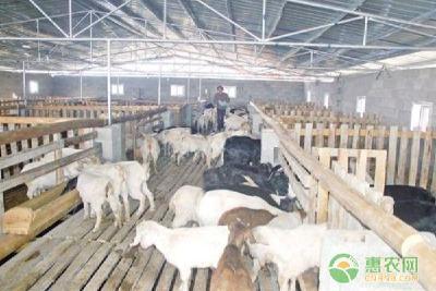 十月畜牧管理要点及注意事项