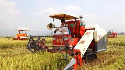 水稻都是什么时候种植?水稻什么时间收割好?