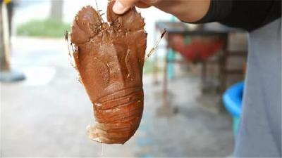 """印度""""拖鞋虾""""泛滥成灾,请求吃货的援助!中国吃货直呼:不敢吃!"""