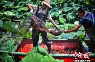 让网红小龙虾鲜遍全国,中国供应链创新满足消费热潮