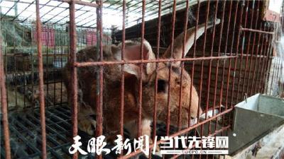 """养殖能手李彦君:兔子是个""""致富宝"""""""