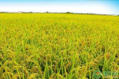 2019年10月28日 水稻价格行情