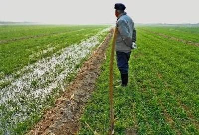 小麦不冬灌,产量减一半!怎么冬灌?