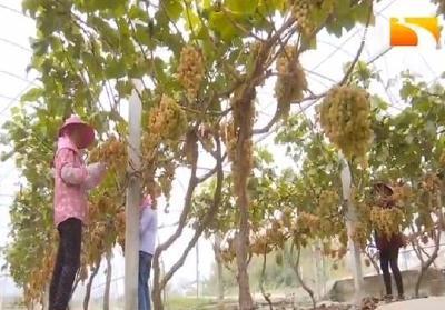 精准扶贫:农旅融合,美了乡村富了村民