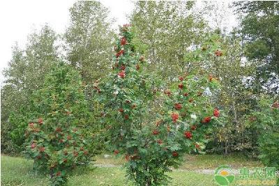 果园土壤板结的原因及其解决方法