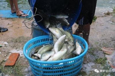 """新鱼大量上市,大规格鱼价仍高企!加州鲈今年疯狂""""吸金""""的原因是什么?"""