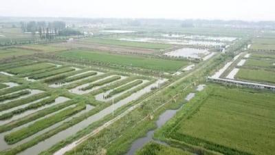 稻田养虾一旦市场不好时,挖过的沟渠应该怎么办?