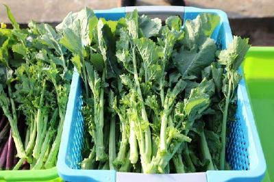"""首个硒高效蔬菜杂交种 """"硒滋圆1号""""在武汉育成"""