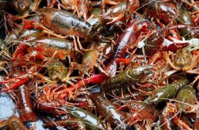 """上半年水产品电商交易额169.46亿元,小龙虾胜过大闸蟹夺得""""C位"""""""