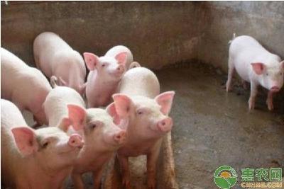 农业农村部发布三年行动方案,制定18项重点任务促生猪产销平衡
