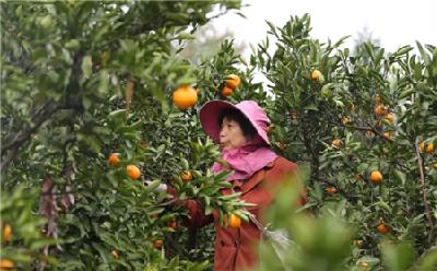 厉害了!荆州这个村靠一传统产业户均增收2万元