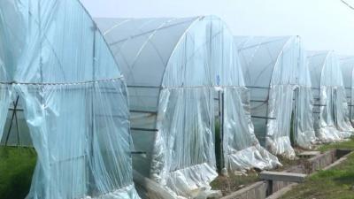 """大棚蔬菜如何提高""""御寒力""""?低温对蔬菜造成的生理障碍"""